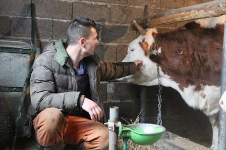 Abid farma krava Srebrenica